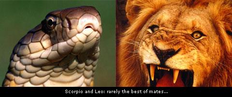 Lion and Cobra